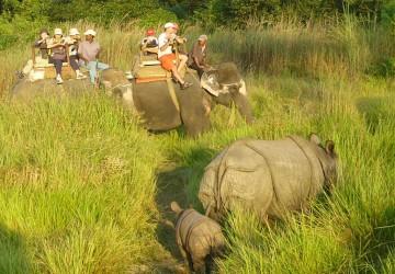 elephant-ride-chitwan